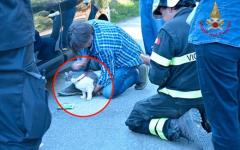 Terremoto, Amatrice: il gatto Rocco, dopo 32 giorni, estratto dalle macerie dai vigili del fuoco