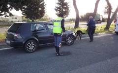 Grosseto: getta lo spinello dal finestrino ma il cane poliziotto lo scopre