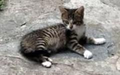 Prato: gattina di tre mesi salvata dalle guardie dell'Enpa