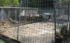 Massa: maltrattò e uccise il cane. Ex cacciatore condannato a 6 mesi di carcere