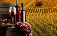 Pisa: nasce il vino con etichetta Scuola Superiore Sant'Anna e Tenuta di Ghizzano