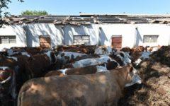 Terremoto: la Commissione Ue stanzia fondi a favore degli agricoltori colpiti