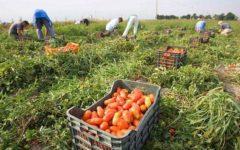 Agricoltura: 17.000 lavoratori exracomunitari potranno essere assunti nel 2017. I flussi stabiliti dal Ministero dell'interno