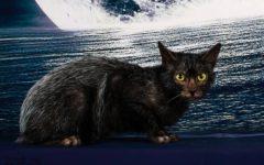 Firenze: i gatti più belli del mondo all'Obihall, 25 e 26 marzo. In esclusiva in Italia i rarissimi gatti mannari (foto)