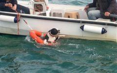 Pisa: cane pitbull salvato in mare dalla Capitaneria di porto. Si era tuffato per il bagno con il padrone
