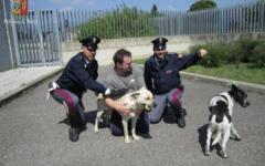 Autostrada A1, casello Impruneta: la Polizia stradale ferma il traffico e salva due cani. Vagavano sulla carreggiata