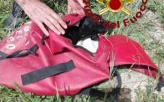 Grosseto: cucciolo cade in un crepaccio di 30 metri. I pompieri lo salvano. E' senza padrone (Foto)