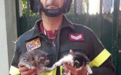 Pisa: quattro gattini abbandonati salvati dai vigili del fuoco