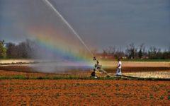 Caldo: Coldiretti lancia l'allarme siccità per le campagne. Cresce il rischio incendi