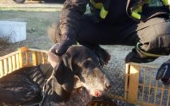 Firenze: cane con la zampa rotta salvato in Arno dai vigili del fuoco (Foto)