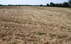 Toscana: piano contro la siccità. Ma Firenze non rischia la sete (la diga di bilancino è piena)
