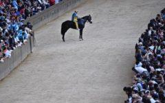 Palio di Siena: la procura ordina analisi su Tornasol, il cavallo della Tartuca che non ha voluto correre