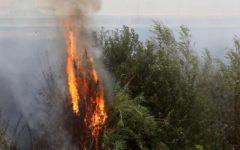 Incendi: in un mese hanno divorato 26.000 ettari di bosco. 200 in Toscana