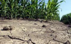 Emergenza siccità: a secco i 2/3 dei campi coltivati della penisola