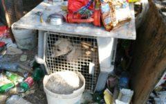 Calenzano (Firenze): cani e uccelli tenuti male. Proprietario romeno denunciato