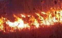 Pisa: vasti incendi minacciano abitazioni, l'intervento dei vigili del fuoco