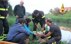 Pisa: cane Labrador spaventato dai tuoni rischia di annegare. Lo salvano i vigili del fuoco
