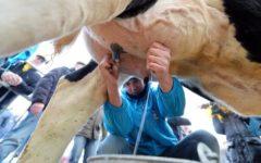 Latte Mukki in Cina: accordo con il Gruppo Alibaba. Dalla Toscana alle tavole cinesi