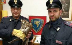 Vecchiano (Pi): falco pellegrino intrappolato, salvato dalla Polstrada sulla A 12