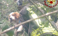 Castel del Piano (Gr): cane da caccia caduto in un dirupo recuperato dai vigili del fuoco