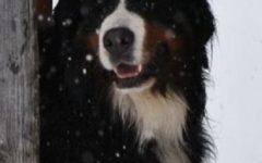 Sondrio: muore cadendo dal muretto per sfuggire al cane che l'aveva morso. Condannati i padroni