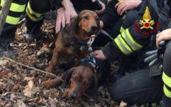 Pistoia: cane incastrato in una tana d'istrice. Salvato dai vigili del fuoco