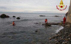 Livorno: carcassa di delfino recuperata in mare dai vigili del fuoco
