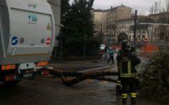 Firenze: via Mariti ostruita da un grosso ramo. Camion della nettezza urbana contro un albero
