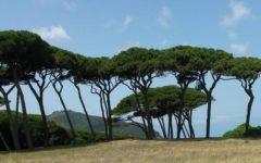 Toscana: finanziamenti per il ripristino di foreste danneggiate dalla cocciniglia, domande entro il 20 febbraio