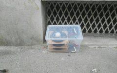 Firenze: evacuata una scuola, allarme per scatola sospetta. Poi rientrato