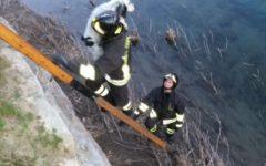 Agliana (Pt): cane setter caduto in acqua recuperato dai vigili del fuoco