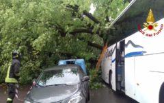 Firenze: feriti per albero caduto su pullman di turisti nel lungarno del Tempio (Foto)