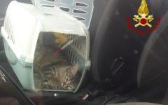 Civitella val di Chiana (AR): coniugi chiusi fuori dall'auto dal gatto, li salvano i pompieri
