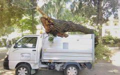 Firenze: ramo di quercia cade su veicolo raccolta rifiuti, l'operatore era all'esterno