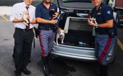 Autostrada A1: canina e 7 cuccioli abbandonati nell'area di servizio Arno, a Reggello. Li salva la Polstrada (Foto)