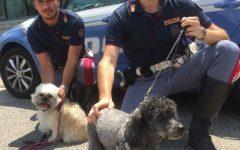 Firenze A1: due cani accuditi dalla polizia stradale e restituiti alla padrona