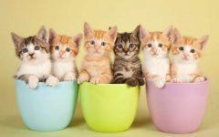 Oggi, 8 agosto, giornata mondiale del gatto (foto)