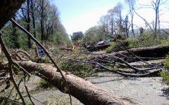 Firenze: sarà ricostituito entro l'autunno il patrimonio arboreo distrutto dal fortunale del 2015