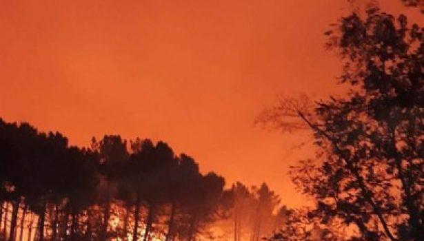 Pisa: incendio nella notte sul Monte Serra. Decine di famiglie evacuate nel comune di Calci