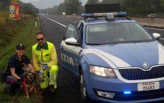 Autostrada A1 e A11: cane e gatto salvati dalla Polizia stradale