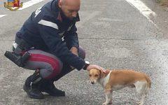 Polizia stradale della Toscana: salvato un cane sulla Siena-Bettolle; cinese con pesci moribondi sull'A1