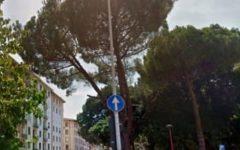 Firenze: 18 nuovi alberi in piazza Leopoldo, Dalmazia e viale Pieraccini