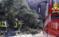 Grosseto e Siena: interventi dei vigili del fuoco per alberi e campanili pericolanti