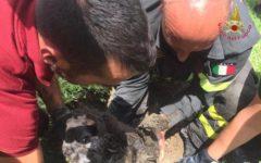 Pisa: cane Lilli intrappolato in un tubo salvato dai Vigili del fuoco